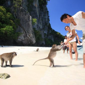 Phi Phi Islands Quality Tour Monkey