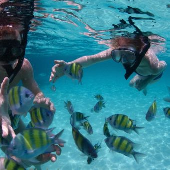 Phi Phi Islands Quality Tour Snorkeling