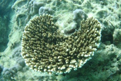 Phi Phi Island Premium tour Snorkeling 1