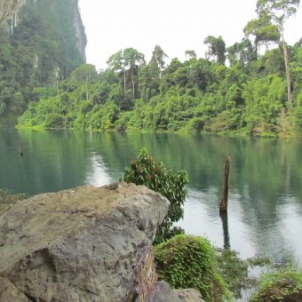 Khao Sok Lake Tour 2 Days 1 Night-Cheow Lan Lake-vegetation