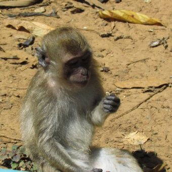 Khao Sok Lake Tour 2 Days 1 Night Monkey