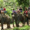 elephant trekking phuket go around