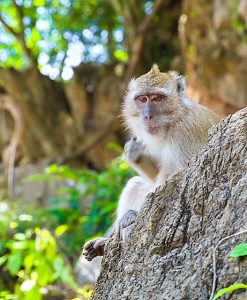 surin island and khao sok lake 3 day 2 night monkey khao sok lake