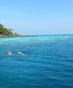 surin similan islands 2 day 1 night see view